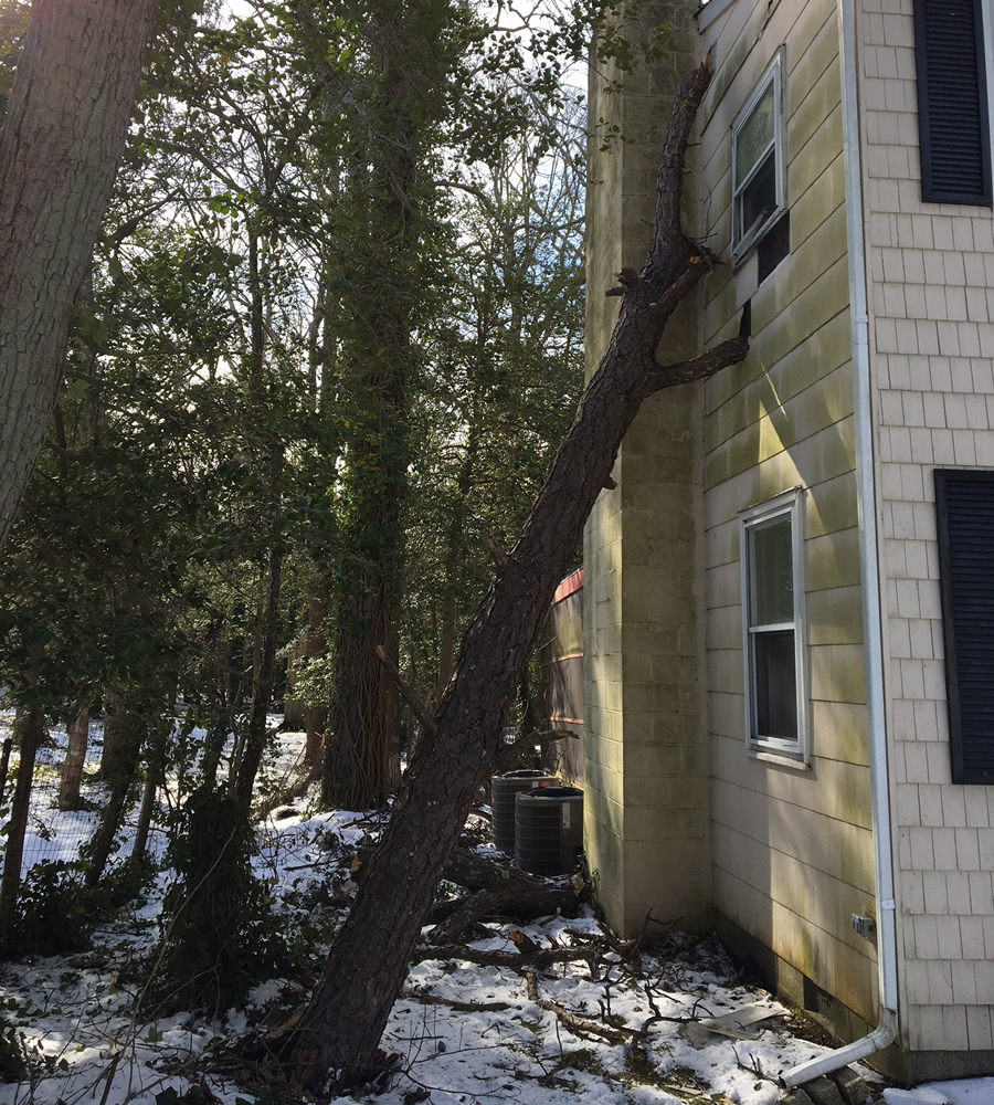 tree-roof-damage-cape-may-county-nj