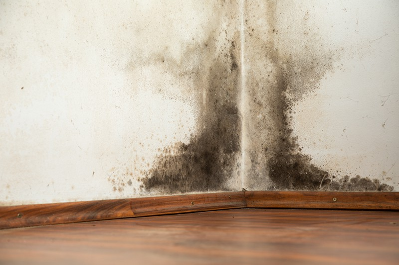 mold  damage removal new jersey cape may county